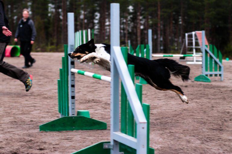 © Emma Tuominen